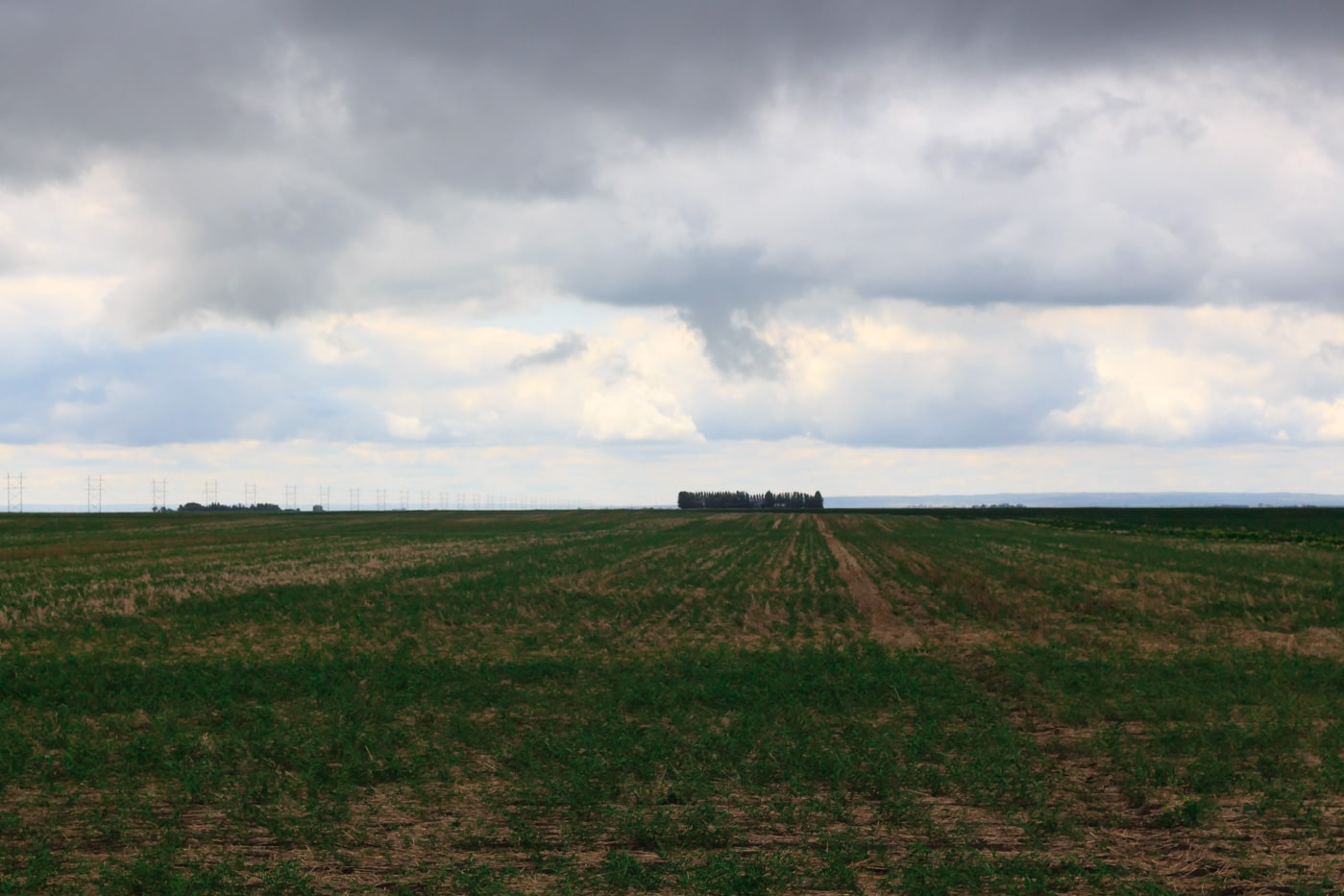 Lentil Farm in Saskatchewan