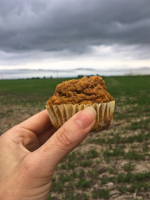 a hand holding a Lentil Muffin with a lentil field in the background